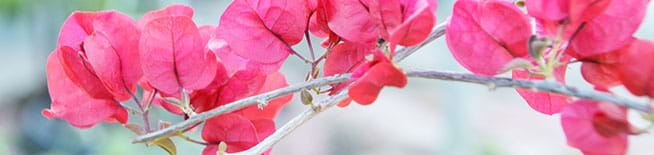 Bonsai Oc Bonsai Orange County Bonsai In California And The Area Of La Los Angeles California Usa We Sale Bonsai Buy Bonsai Trees Plants Flowers Bonsai Tools Bonsai Accessories